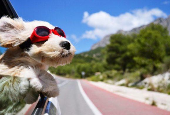 Roadtrip Dog tips