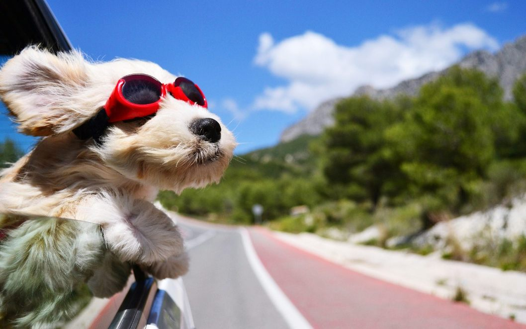 Roadtrip Dog tips